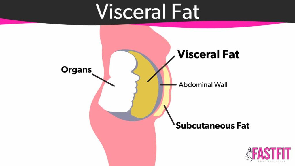 visceral fat how to lose belly fat fast fit body sculpting
